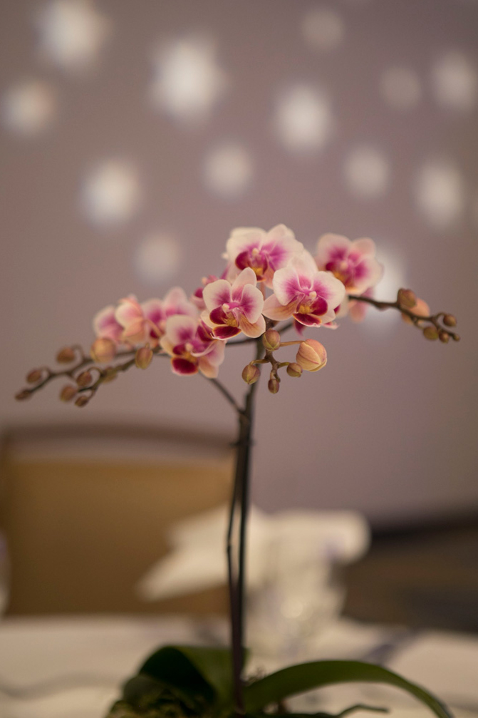 Orchid-Pink